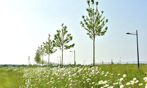 Landscape branding